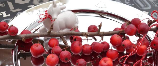 Reh posiert mit Zieräpfelchen °Red Sentinel