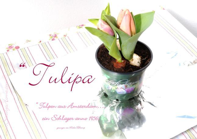 Tulpengeflüster