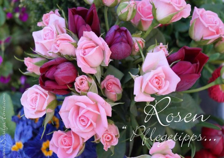 Titelbild Rosenpflege April 2016