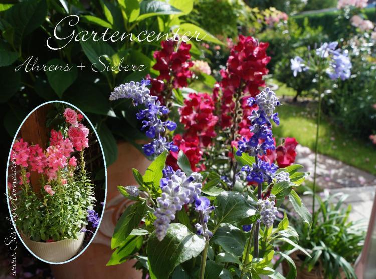 Gartencenter Ahrens + Sieberz